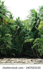 Lush, tropical jungle with palm trees on a beach front in Montezuma, Costa Rica