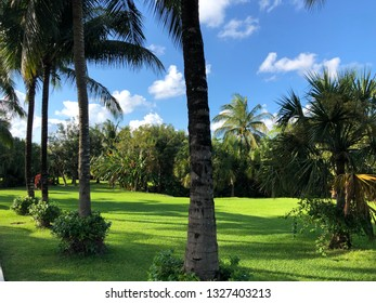 Lush tropical nature in Mexico