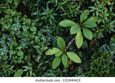 Lush tropical plants foliage in a dark lighting. Green leaves natural pattern shot from above.
