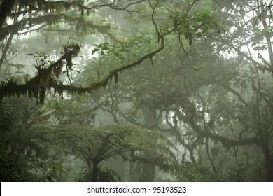 Lush tropical rain forest canopy in Costa Rica