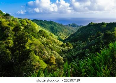 Lush tropical rainforest valley on The Road to Hana, Maui, Hawaii, USA