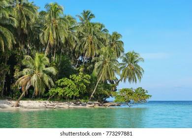 Lush tropical seashore with coconut palm trees and almond trees, Caribbean sea, Bocas del Toro, Panama, Central America