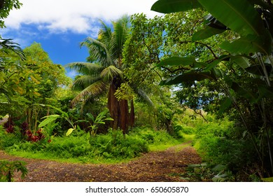Lush tropical vegetation of the islands of Hawaii, USA