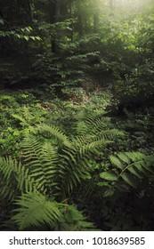 lush vegetation on forest floor, green plants natural background