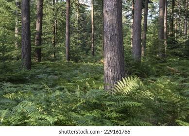 Lush vibrant forest landscape in Summer
