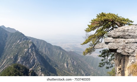 lushan mountain landscape, old pine tree on cliff,  China
