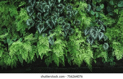 Lushed Greenwall with fern and leaves