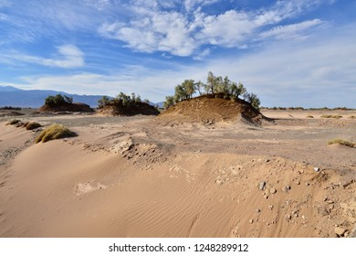 The Lut Desert - Dasht-e-Lut the hottest and driest places on the planet, locate near Kerman. Trees growing on hills of sand being found only in this desert, Iran