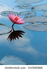a Lutos flower and a reflection of cloudy sky. For some culture its sacred and enlightening flowers.