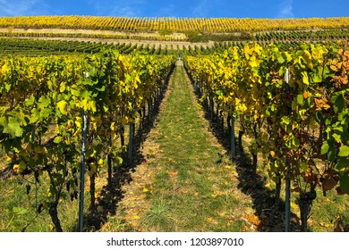 luxembourg moselle region vineyards