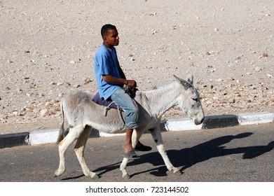 LUXOR, EGYPT - FEBRUARY 25, 2009: Egyptian teen rides a donkey to work