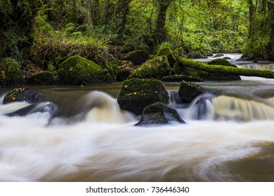 Luxulyan Woods, Luxulyan Valley, St Austell, Cornwall, UK. Fallen leaves and swollen rivers during the Autumn rains in Cornwall