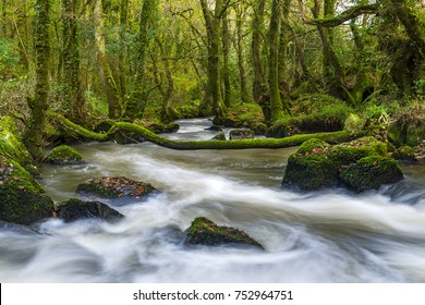 Luxulyon Valley Woodlands, St Austell, Cornwall, UK. Luxulyon Woodlands in Cornwall housed historic mining facilities that were transported along waterways as well as rail lines.