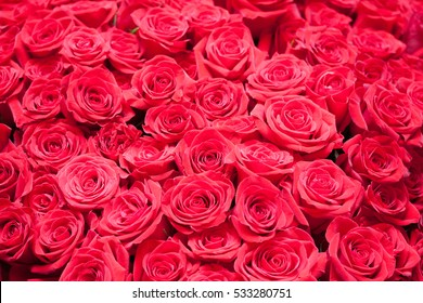 Luxuriant montage with many red roses together