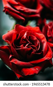 luxurious bouquet of large red roses close-up. low key photography, noir
