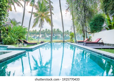Luxury infinity pool and lounge setting in tropical garden landscape with palm trees and rice fields, in Ubud, Bali, Indonesia