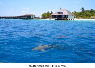 Luxury resort in Maldive right above the ocean. Sometimes Nurse sharks get very close to your hotel room. Resort on a paradise deserted sandbank.
