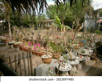 Luzon Philippines, April 1 2018: A back yard tropical garden of a farmhouse in the province