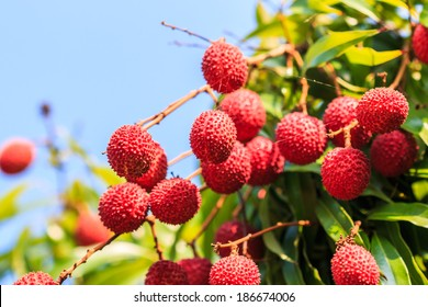 Lychee fruit Asia Thailand