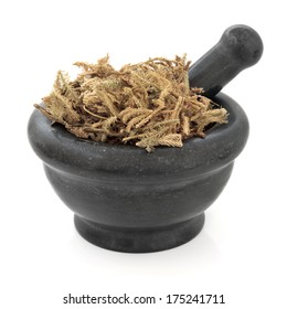 Lycopodium chinese herbal medicine in a black stone mortar with pestle over white background. Shen jin cao.