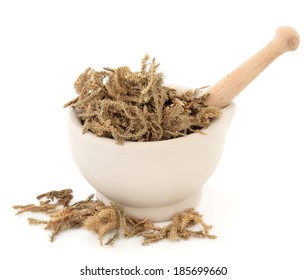 Lycopodium root chinese herbal medicine in a stone mortar with pestle over white background. Shen jin cao.