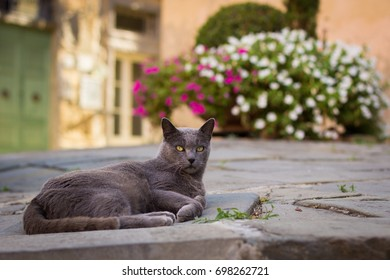 Lying cat on the street