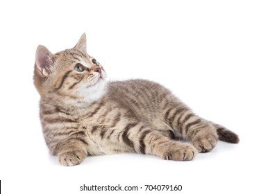Lying kitten cat side view isolated