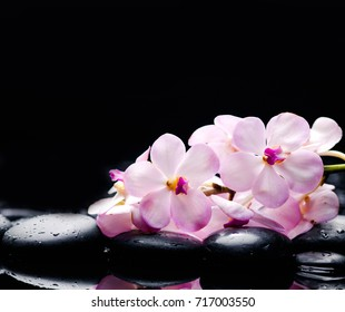 Lying on branch white orchid with black stones on wet pebbles