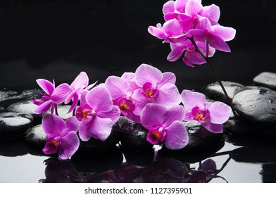 Lying on pink branch orchid and black stones