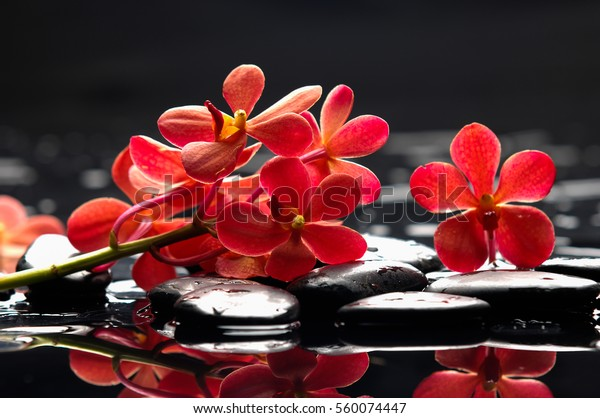 Lying on red orchid with black stones on wet background