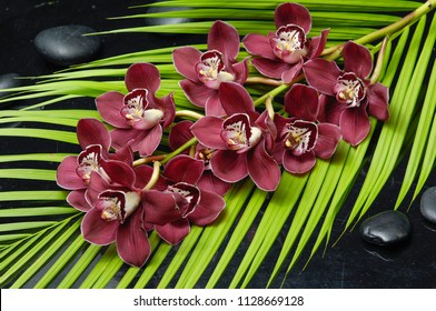 Lying on red,orchid on green palm leaf background and black stones