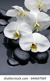 Lying on white  bouquet orchid with black stones on wet background