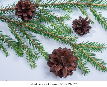 Lying on wooden background with spruce twigs and cones.