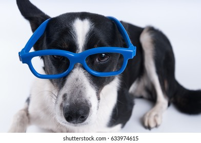 Lying portrait of dog with calculator and looking at camera