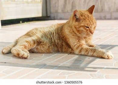 Lying red cat on pavement in a garden