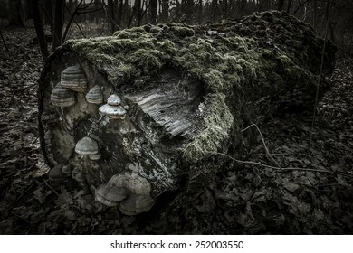 Lying tree trunk covered with moss and mushrooms in a dark forest