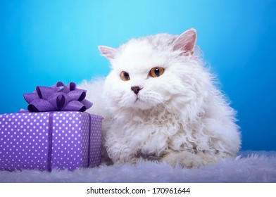 Lying white cat with a gift