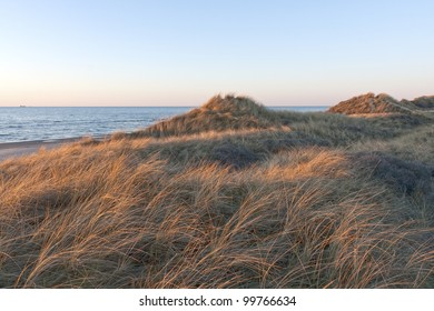 Lyme grass in the sunset at Skiveren near The Skaw, Denmark. Copy Space