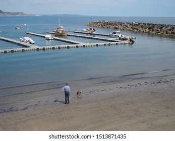 Lyme Regis, Dorset/ UK - July 3 2019: a man walking his dog on the beach besides a floating jetty for landing fishing boats inside the cobb/ harbor wall at Lyme Regis on a sunny summer's day