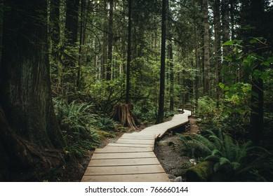 Lynn Valley Park North Vancouver Canada