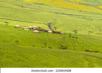 Maasai boma huts (enclosure) on green yellow field of Burr Marigold growing near Lake Magadi at Ngorongoro Crater Conservation Area in Tanzania, East Africa