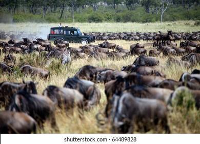 Maasai Mara Animal Migration