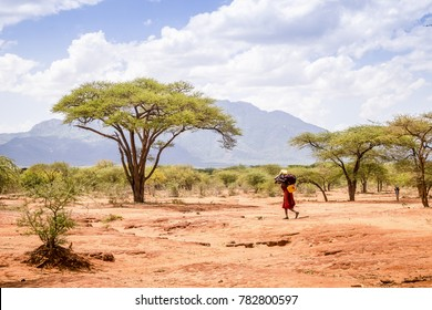 Maasai woman carrying heavy load through savanna, Kenya