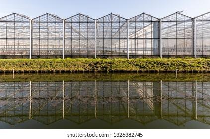 Maasdijk, The Netherlands - February 25, 2019: Great industrial flower greenhouse with working man in Maasdijk in Westland in the Netherlands.