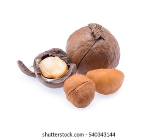 Macadamia nut. roasted macadamia isolated on white background