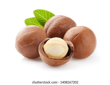 Macadamia nuts in closeup with leaf