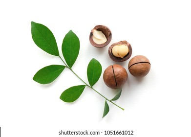 Macadamia nuts with green leaf on white background. Top view.