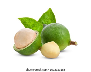 macadamia nuts with leaf isolated on white background.