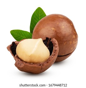 Macadamia nuts with leaves isolated on white background