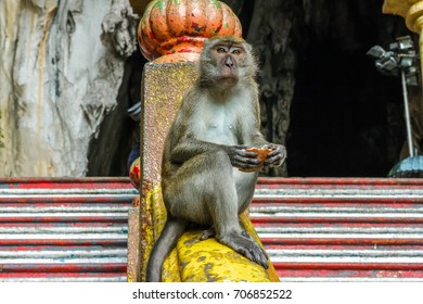 A macaque monkey sits at the top of the steps to the Batu Caves near Kuala Lumpur, Malaysia.
